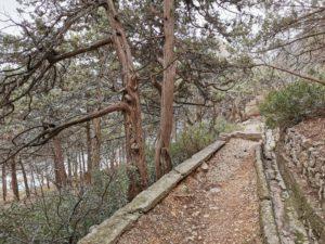 allei-simeizskogo-parka