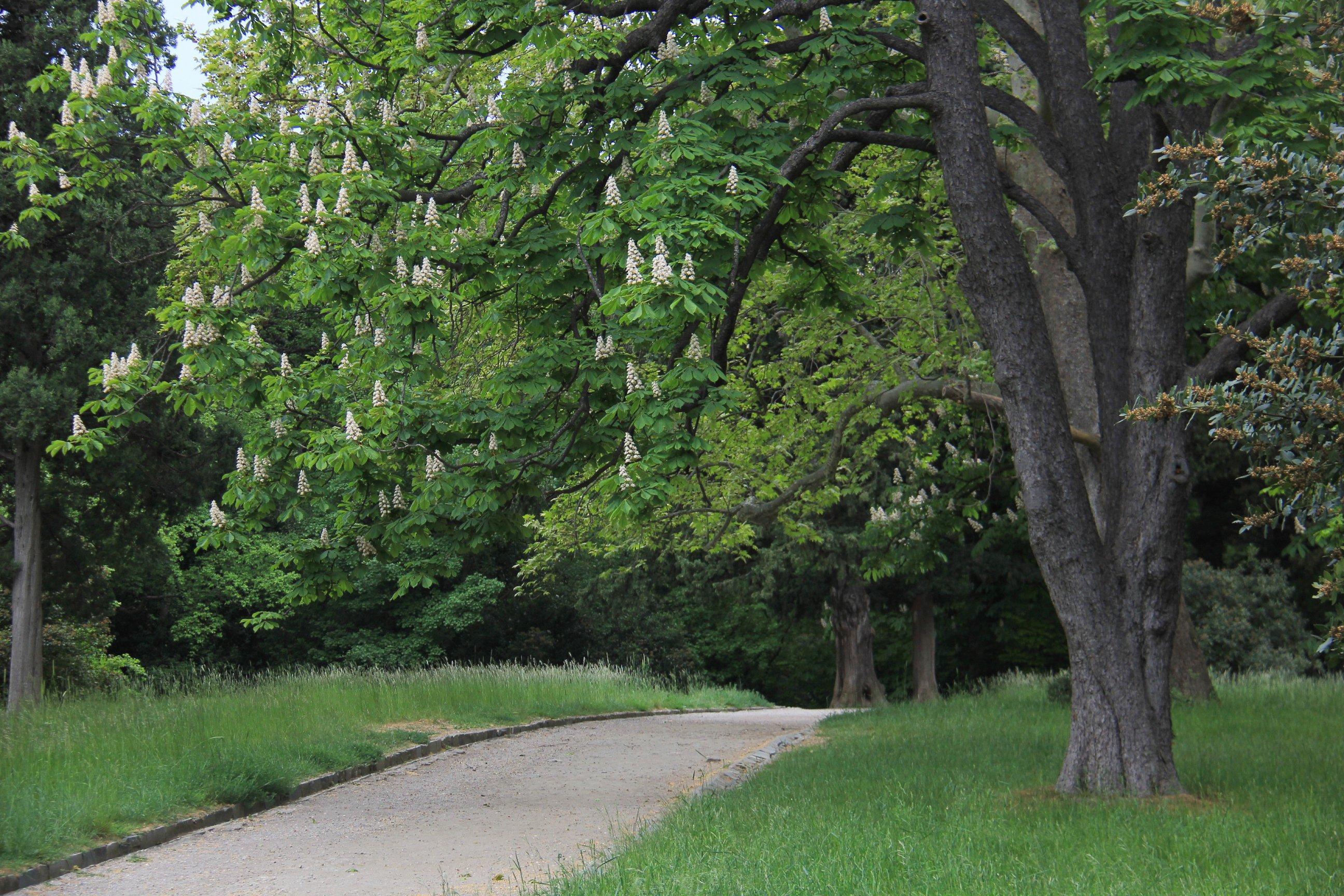 vorontzovskij-park-vesnoj