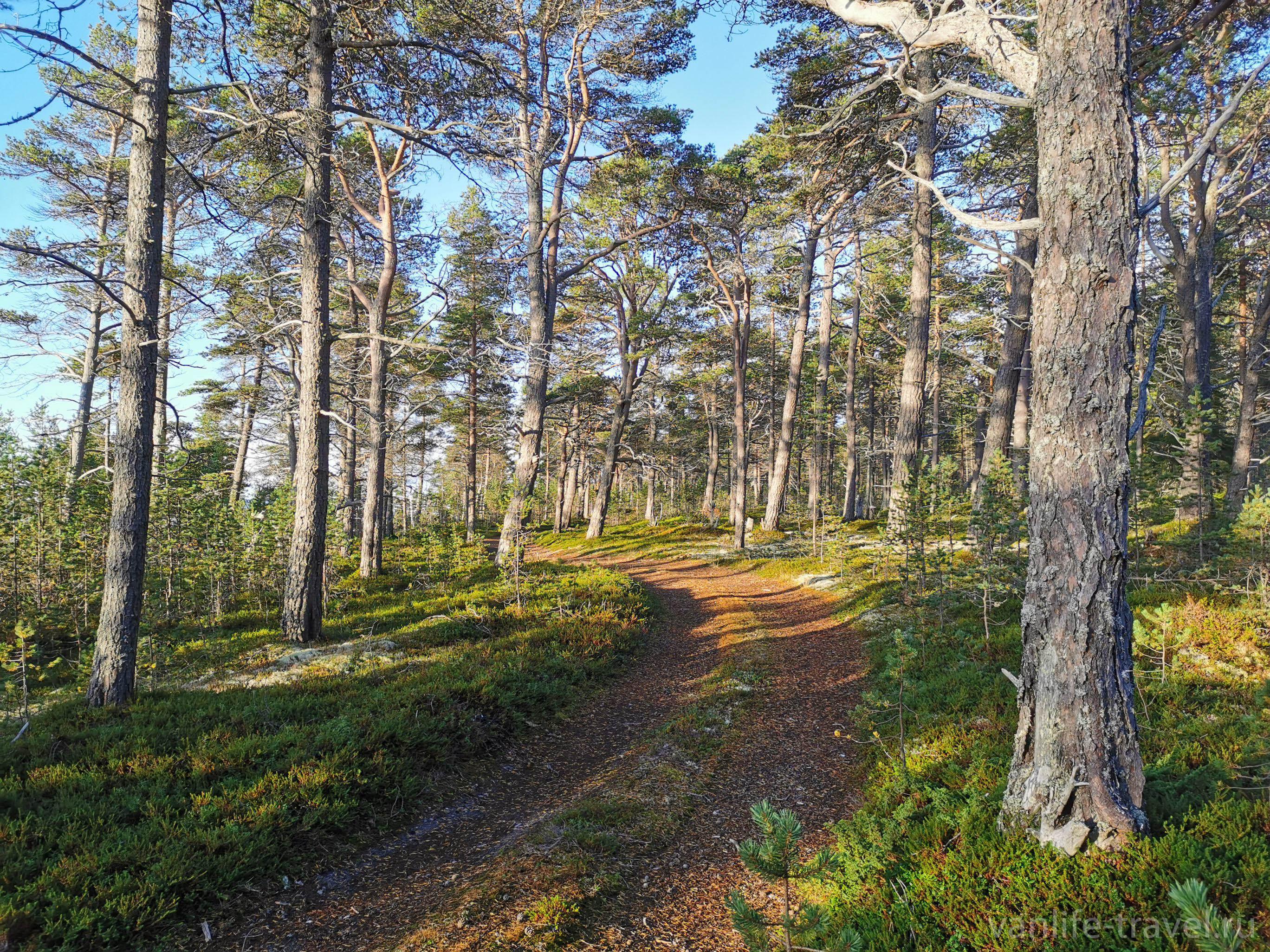 terskij-bereg-lesnye-dorozhki